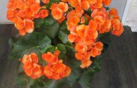 Bégonia D'Fleurs, fleuriste à Fontenay-le-Comte en Vendée