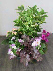 Coupe plante ton rose D'Fleurs, fleuriste à Fontenay-le-Comte en Vendee