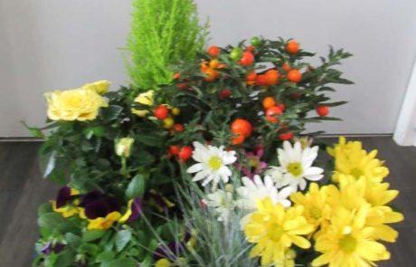 Coupe plantes D'Fleurs, fleuriste à Fontenay-le-Comte en Vendee
