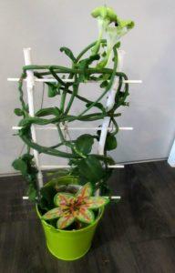Lanterne d'Afrique D'fleurs artisan fleuriste Fontenay le Comte