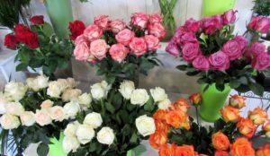 Roses commerce équitable - D'Fleurs, fleuriste à Fontenay-le-Comte en Vendée