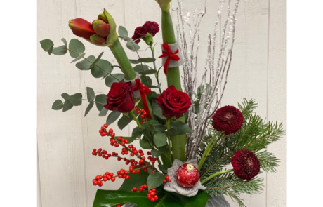 Noël amaryllis